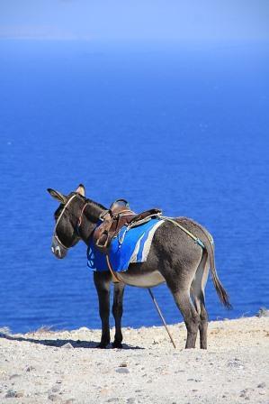 donkey-Gréce